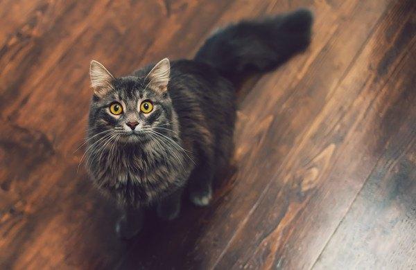 座って遠くを見る猫