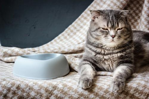 機嫌の悪そうな猫