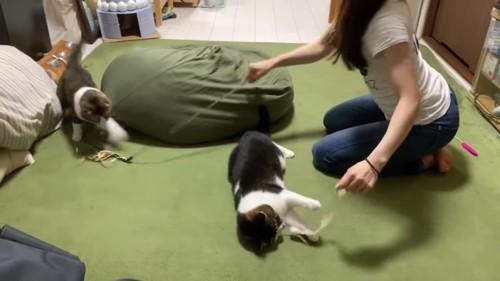 おもちゃでそれぞれ遊ぶ2匹の猫