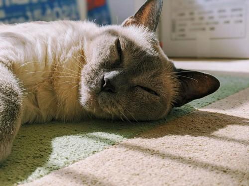 日向ぼっこで寝る猫