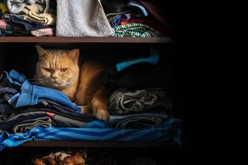 クローゼットに隠れる茶トラ猫
