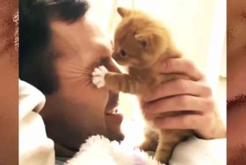 男性の顔に覆い被さる子猫