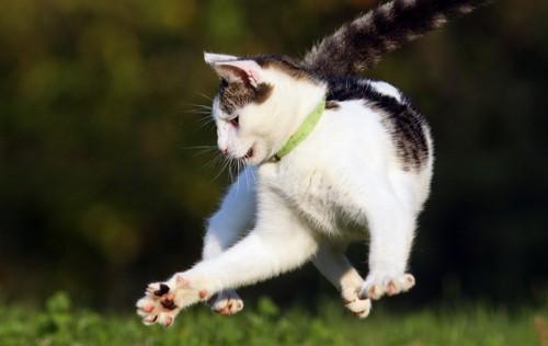 宙を舞う猫