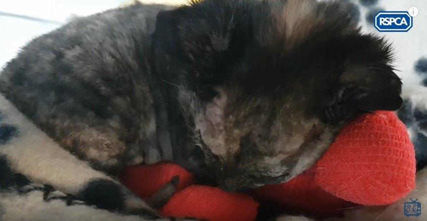 治療前の子猫