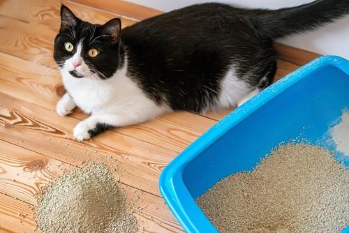 トイレに入らない猫