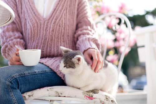 コーヒーカップを持って椅子に座る人に寄り添う猫