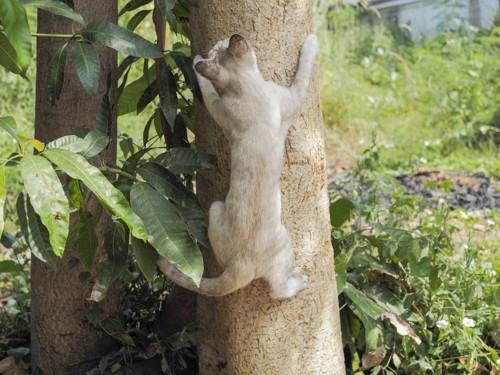 木に登り止まる猫