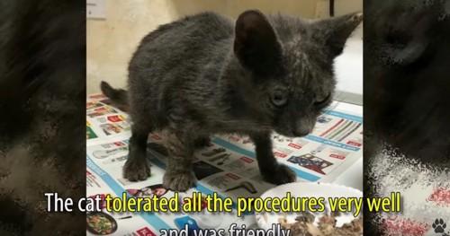 餌入れの前に立つ猫