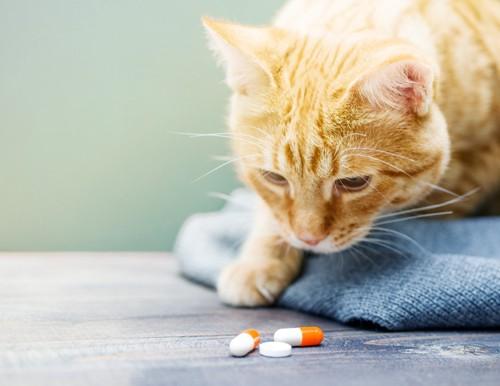 テーブルの上の薬に顔を近づける猫