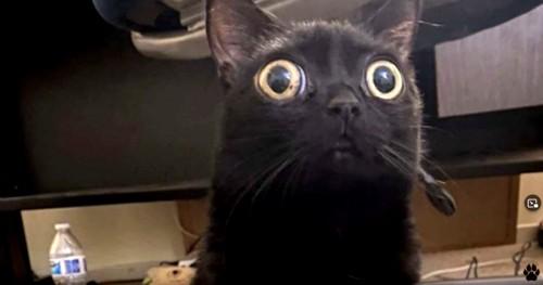 目の大きな黒猫