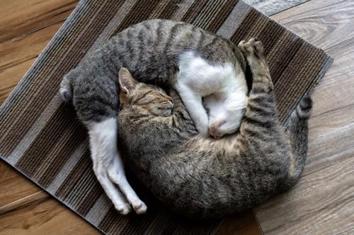 丸くなって眠る二匹の猫