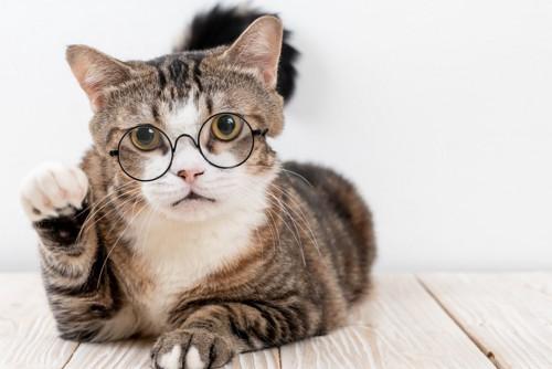 眼鏡をしている猫