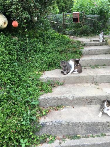猫島の風景