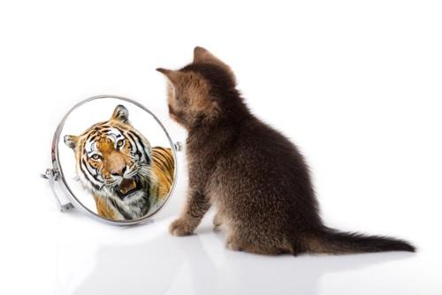 鏡を覗いている猫