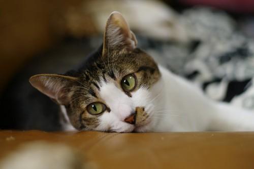 机に顔を乗せる猫