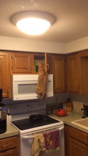 おやつを見つける猫