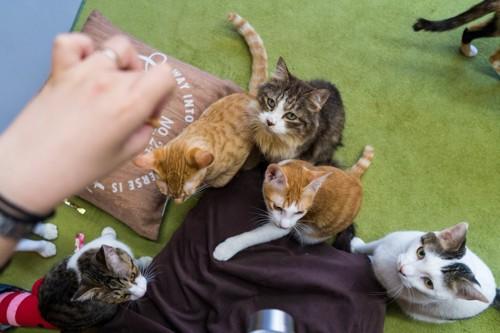 人の手に興味を示す猫たち