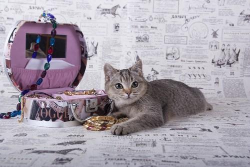 宝石箱と猫