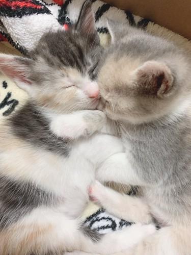 子猫のお休みタイム