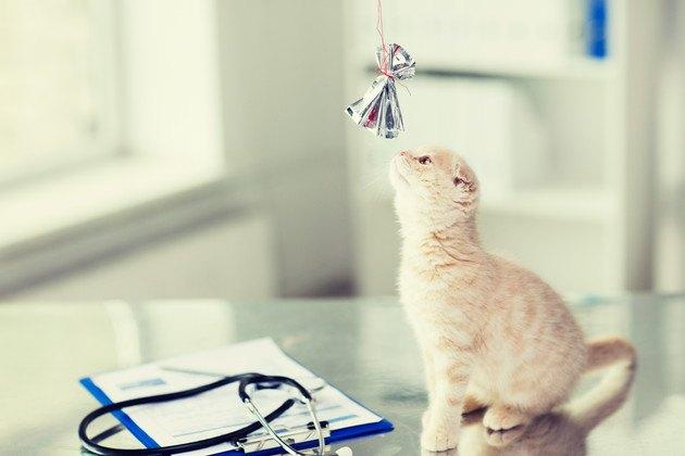 病院で診察台に乗っている子猫