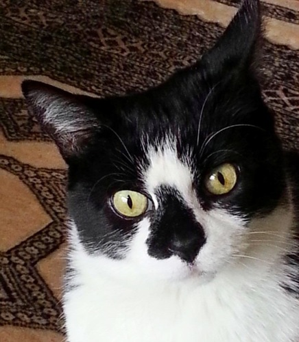 白黒猫のチップくん