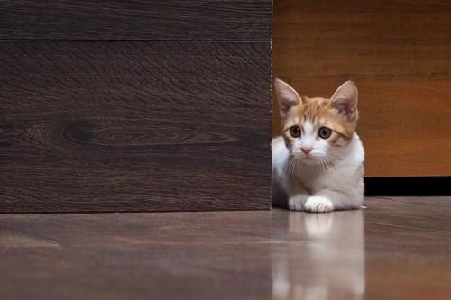 怯えて物陰で震えている猫