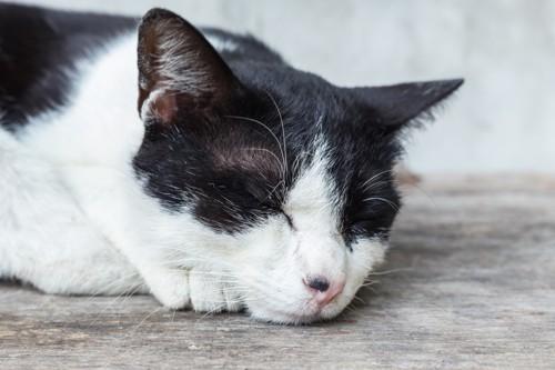 目の上が少しはげているハチワレの猫