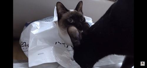 袋に入る猫と黒猫
