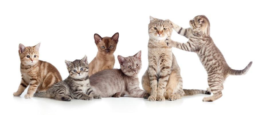 群れている子猫たち