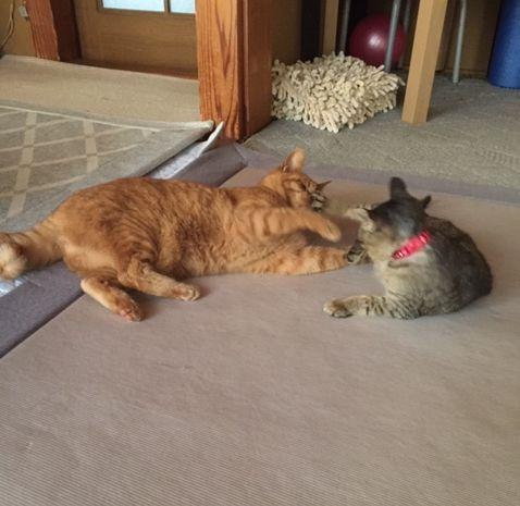 2匹で向かい合っている猫たち