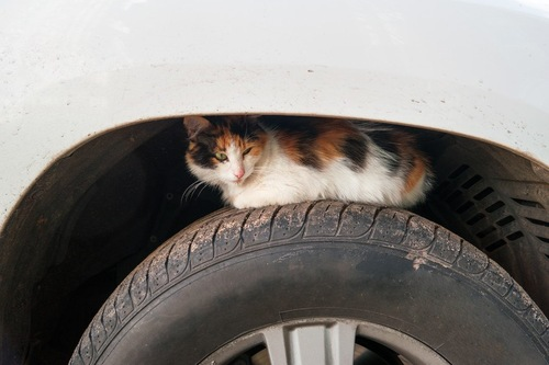 タイヤの上の猫