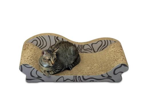 爪とぎベッドに座る猫
