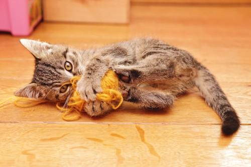 おもちゃを蹴って遊ぶ子猫