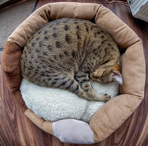 猫用のベッドの中で丸まって眠る猫