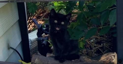 庭に座る黒猫