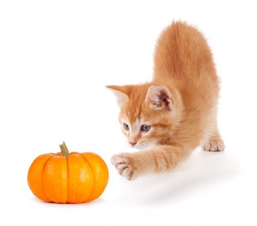 野菜と子猫