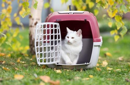 草むらに置かれた扉の開いたキャリーバッグの中にいる猫