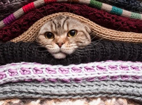 布の間に挟まっている猫