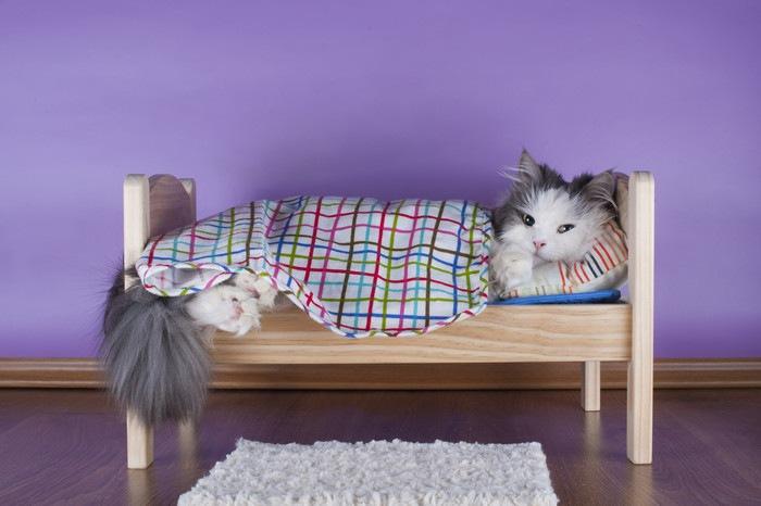 ベッドで寝ている猫