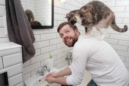肩の上に登る猫