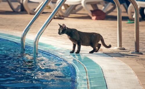 プールに居る猫
