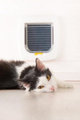 キャットドアの前で寝転ぶ猫