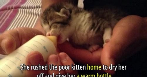 ミルクを飲む猫と女性の手