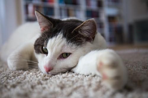 転がっている猫