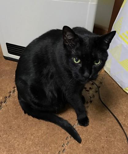 ストーブの前の黒猫