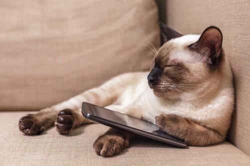 スマホを持って眠る猫