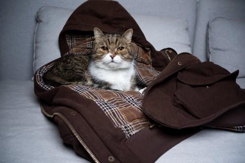 裏地チェックのアウターに乗っている猫
