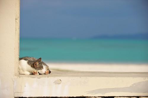 海の見える場所でくつろぐ猫
