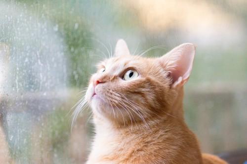 雨の窓際にいる猫