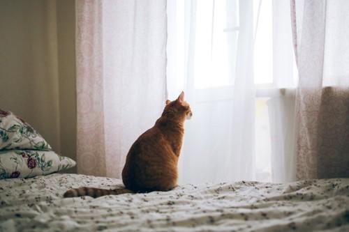 ベッドの上で外を眺める猫